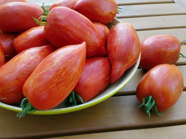 Tomate Striped Roman
