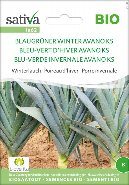 Winterlauch BLAUGRÜNER WINTER