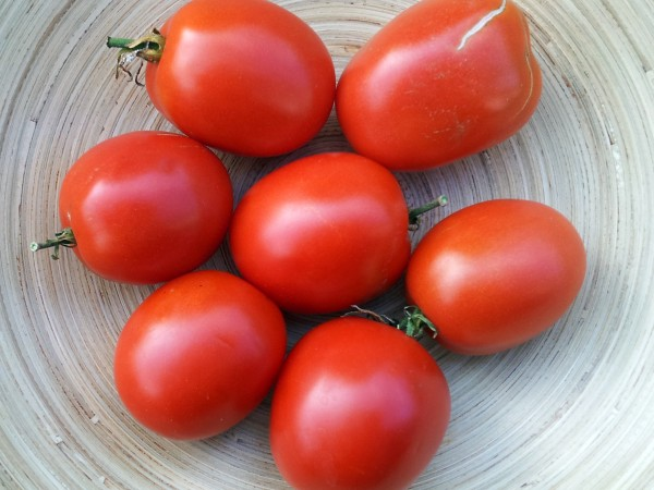 Tomate De Berao rot