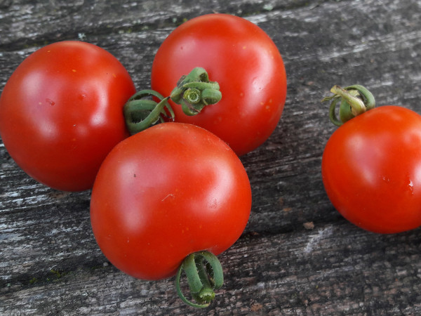 Tomate Quedlinburger Frühe Liebe