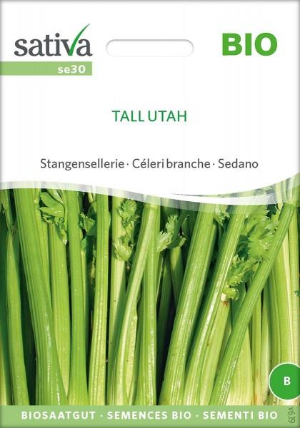 Stangensellerie TALL UTAH