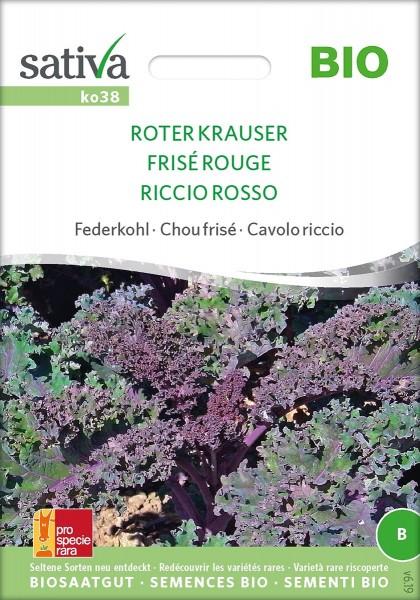 Federkohl / Grünkohl ROTER KRAUSER