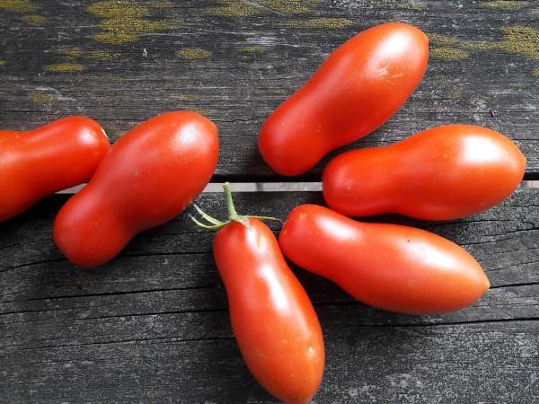 Tomate Himmelsstürmer