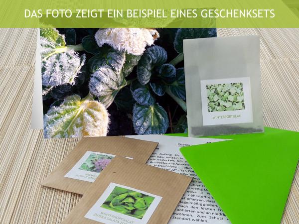 Samengrüße Grün im Winter, Geschenkset