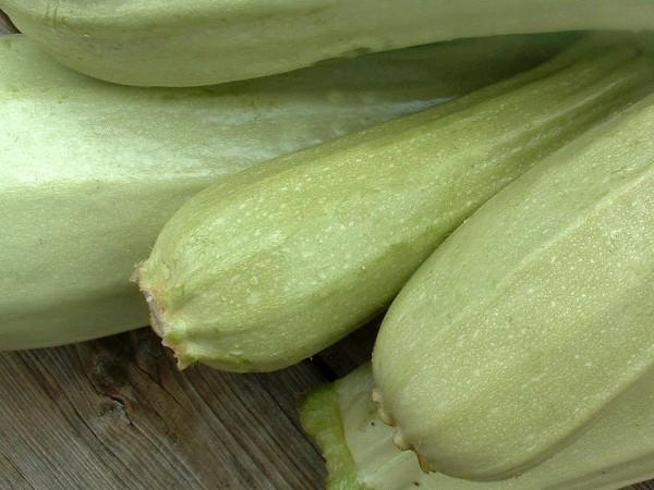 Zucchini Rumänische Cremefarbige