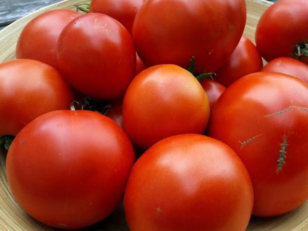 Tomate Winterkeeper
