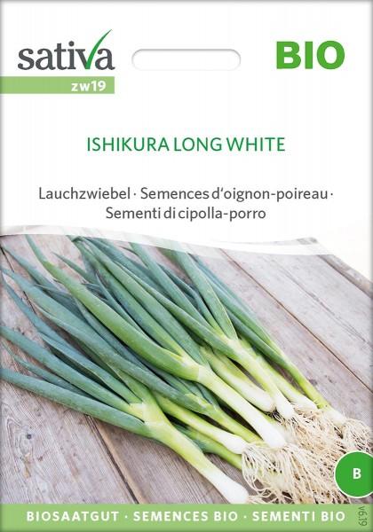 Lauchzwiebel ISHIKURA LONG WHITE