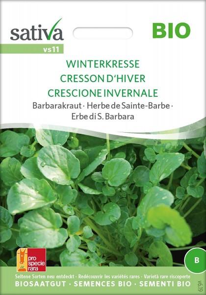 Barbarakraut WINTERKRESSE