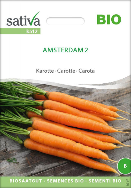 Frühkarotte Amsterdam