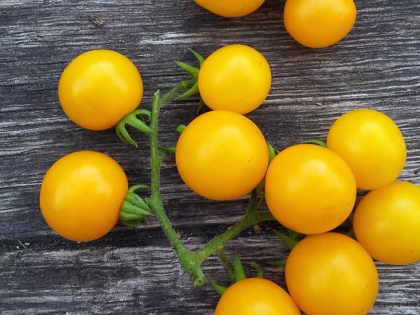 Tomate Galinas Sibirian Cherry