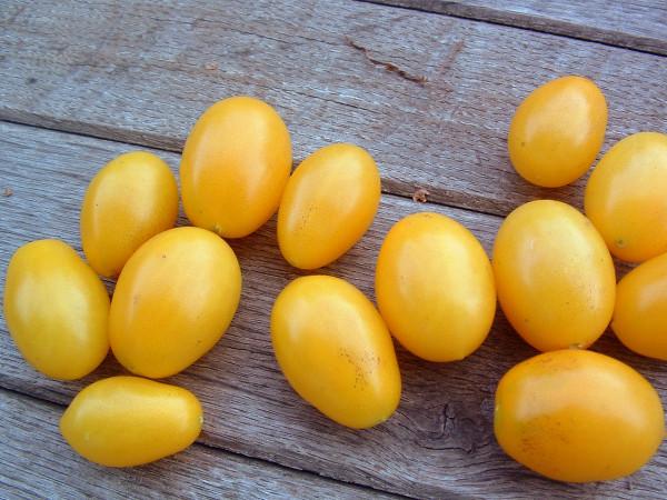 Tomate Malschor Isura