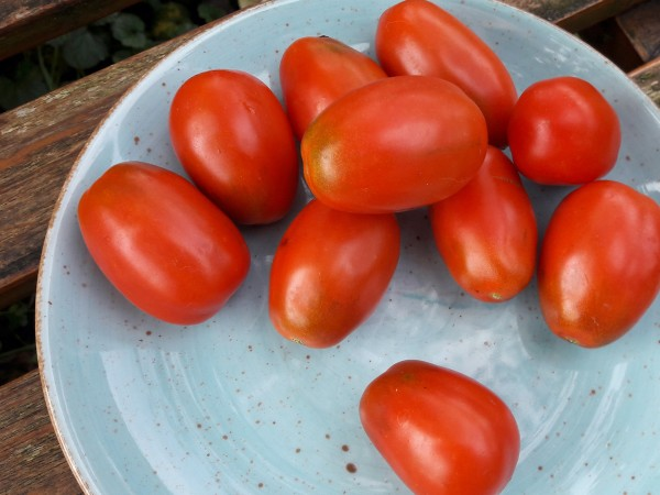 Tomate Omas Beste
