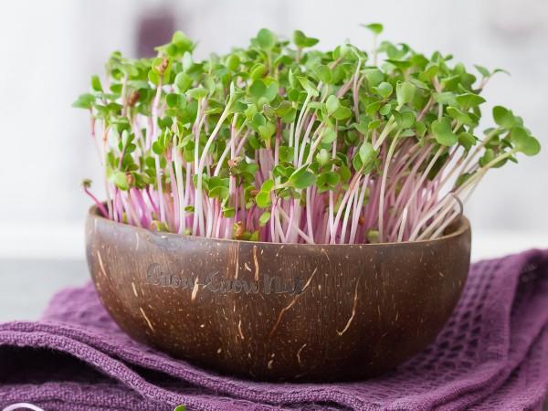 Grow Grow Nut für Microgreens