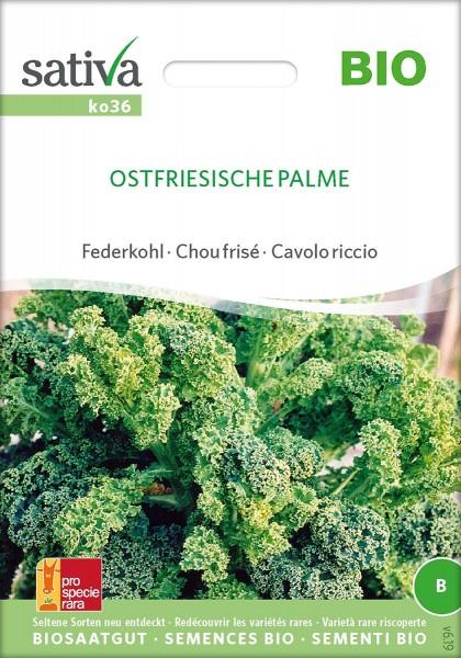 Federkohl / Grünkohl OSTFRIESISCHE PALME